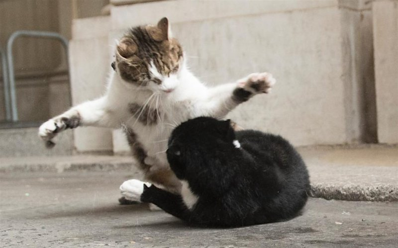 Larry gets the upper hand on Palmerston.