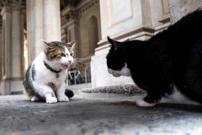 Larry in shocking brawl with Palmerston.